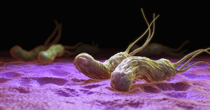 helicobacter-pylori-probiotics